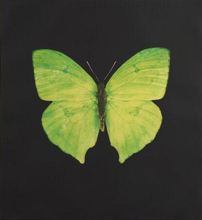 Damien Hirst:The Souls on Jacob's Ladder Take Their Flight (Large Green/Yellow Butterfly)