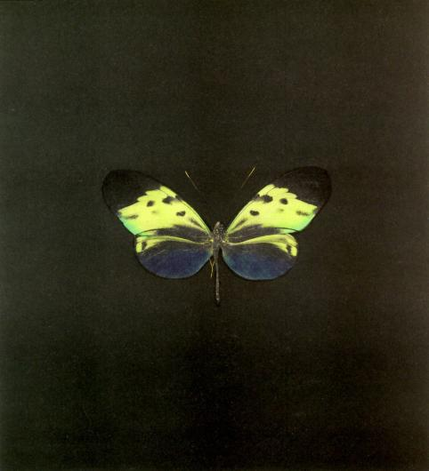 Damien Hirst:The Souls on Jacob's Ladder Take Their Flight (Small Green)