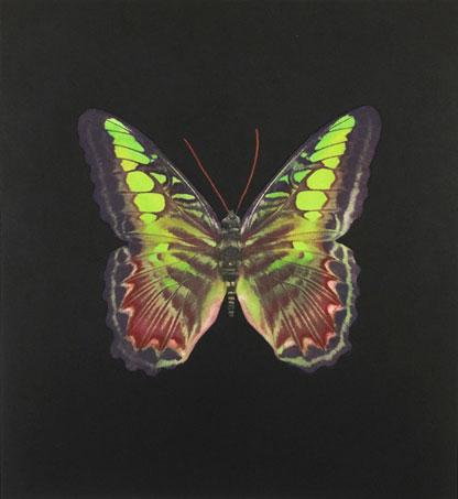 Damien Hirst:The Souls on Jacob's Ladder Take Their Flight (Large Red/Green)