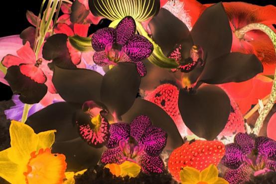 Marc Quinn:In The Night Garden. Helix Nebula
